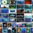 Do you like underwater photography? This magazine is for you - free bi-monthly online Underwater Photography Magazine.