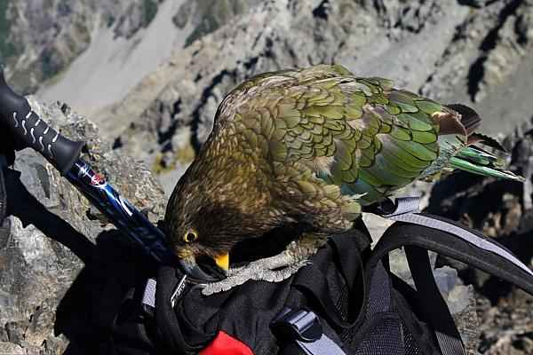 kea checks backpack