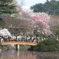 Is it very expensive? Cherry blossom season is coming in Japan and a lot of people would love to visit Japan, but afraid it can be very expensive. Actually it […]