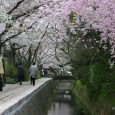 Time is coming for cherry blossom season in Japan. In South Japan it is already open, but the main season starts in early April. There are hundreds site where you...