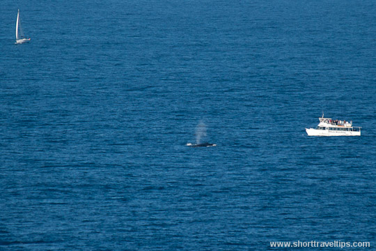 Whale watching from the boat in Sydney