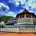 The plan for today is to visit Dambulla Cave Temple,spice gardens,The Temple of the Sacred Tooth Relic in Kandy and tea plantations.