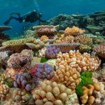 Scuba diving at Lanzarote