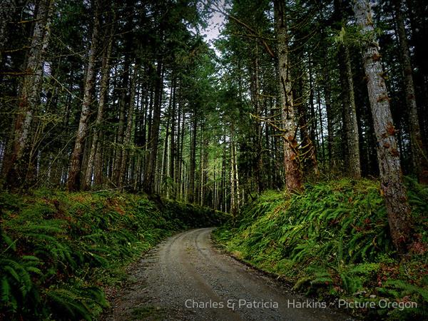 Road In The Woods by Charles & Patricia Harkins