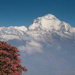 Ghorepani, Nepal